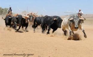 Toros corriendo de la ganadería Torrestrella