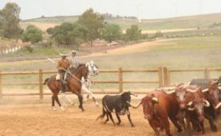 Plaza de toros de la ganadería torrestrella en a campo abierto