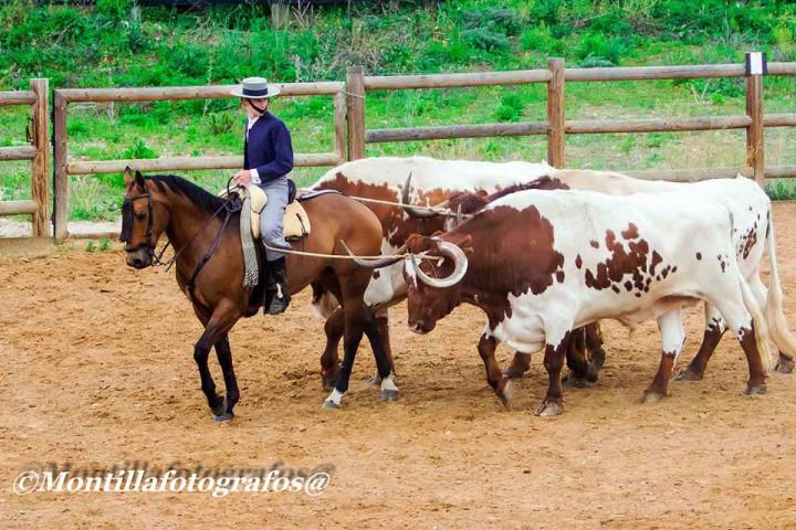 Toros y caballo de la ganadería Domecq de a campo abierto